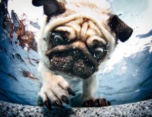 09_underwater-dogs