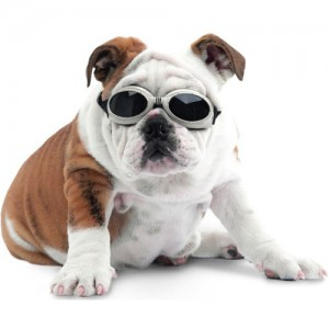 doggles-protective-eyewear-dogs-3