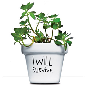 blumentopf i will survive