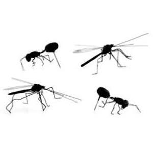 insekten pins reiszwecke