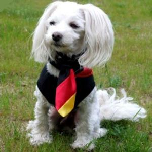 hunde krawatte deutschland