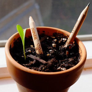 sprout bleistift samen kräuter