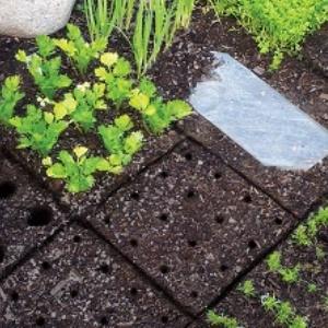 seedingsquares garten pflanzen