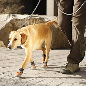 hunde boots schuhe trex ruffwear