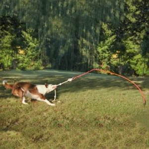 hund spielzeug garten